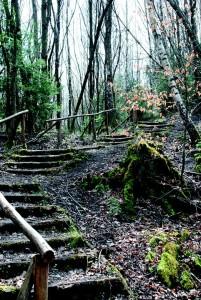 Stairs Emergence Nature Pixabay